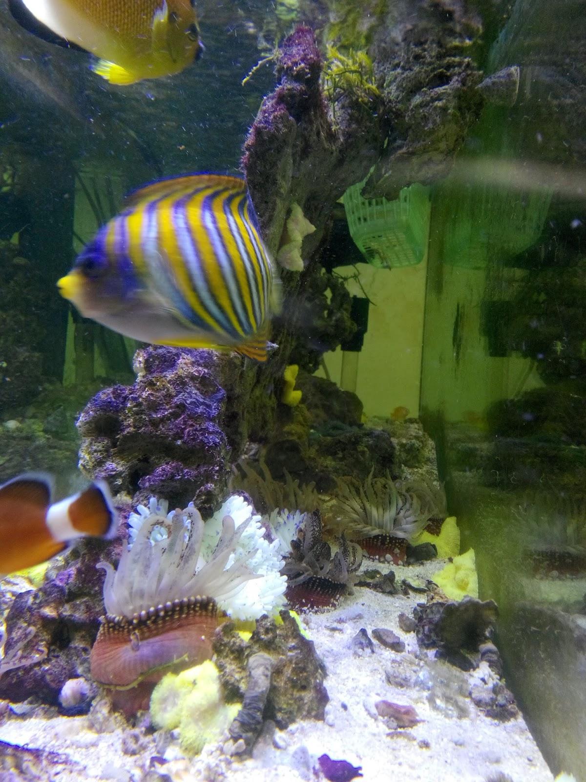 Hong kong aquarium supply hkfish2008 aquarium sea fish for Fish aquarium supplies