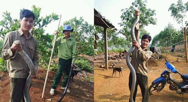 Chàng trai tay không bắt rắn khủng dài gần 3m