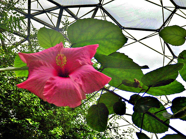 Flowers in the Rainforest Biome, Eden Project, Cornwall