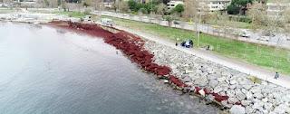 شاطئ إسطنبول يتحول للون الأحمر
