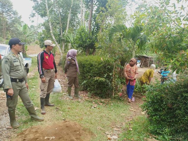 Belum Tuntas di Suoh, Gajah Liar Juga Turun Gunung di Padang Cahya