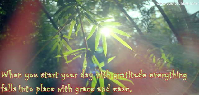 When you start your day with gratitude everything  falls into place with grace and ease.
