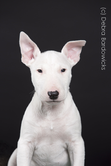 Debra Bardowicks Animal Photography
