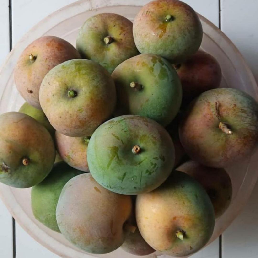Viral! Bibit Buah Mangga Apel Merah Paling Genjah Kota Kediri #jual bibit buah buahan