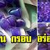 แจกสูตรบัวลอยแก้วมะพร้าวอ่อนดอกอัญชัน เมนูกะทิแสนอร่อยประโยชน์เยอะมาก