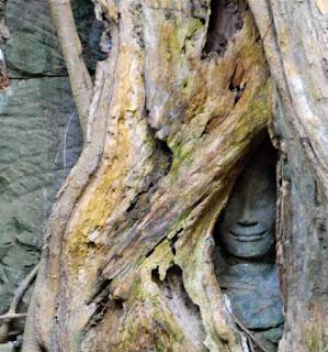 Ta Prohm Tomb Rader Temple Cambodia