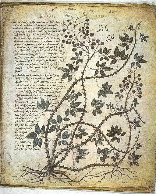 Botánica en la antigua Roma