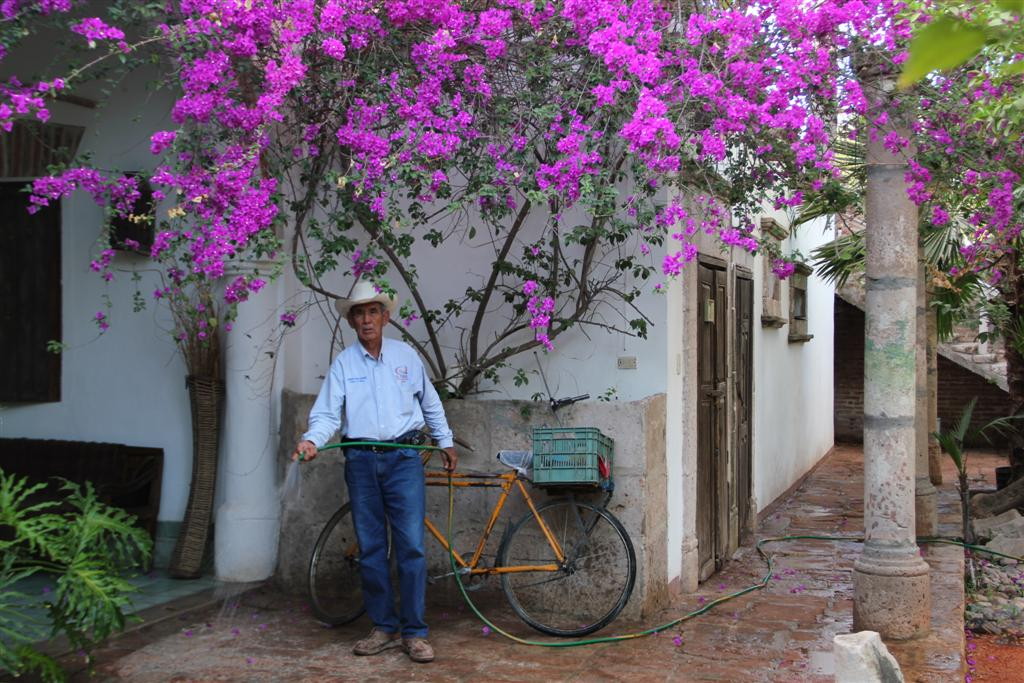 How To Grow Bougainvillea From Seed The Garden Of Eaden