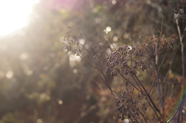 Photographs of weeds in December
