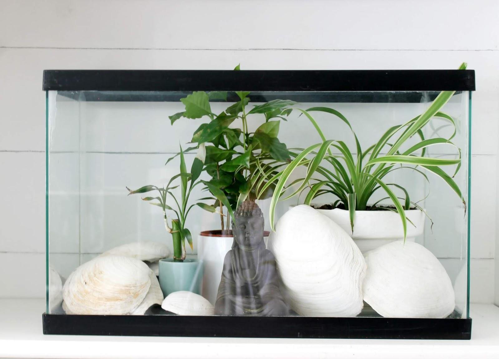 Fish Tank Terrarium
