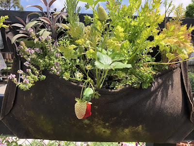 strawberries and herbs