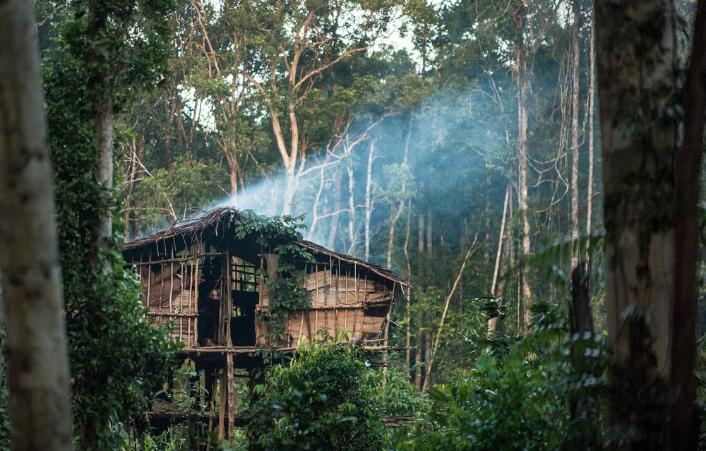 Rumah tangah hutan di Korowai, Papua