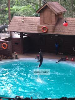 Hotel Seruni Puncak, Puncak, Taman Safari, Weeknd Activity, Liburan ke Puncak, Liburan ke Taman Safari, Beach Pool, Cowboy Show, Dolphin show, Tiger Show, HTM Taman Safari