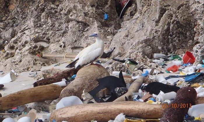 Plástico na praia