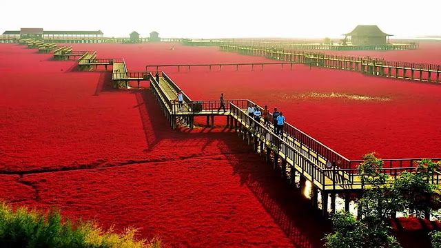 4 Red Beach, China