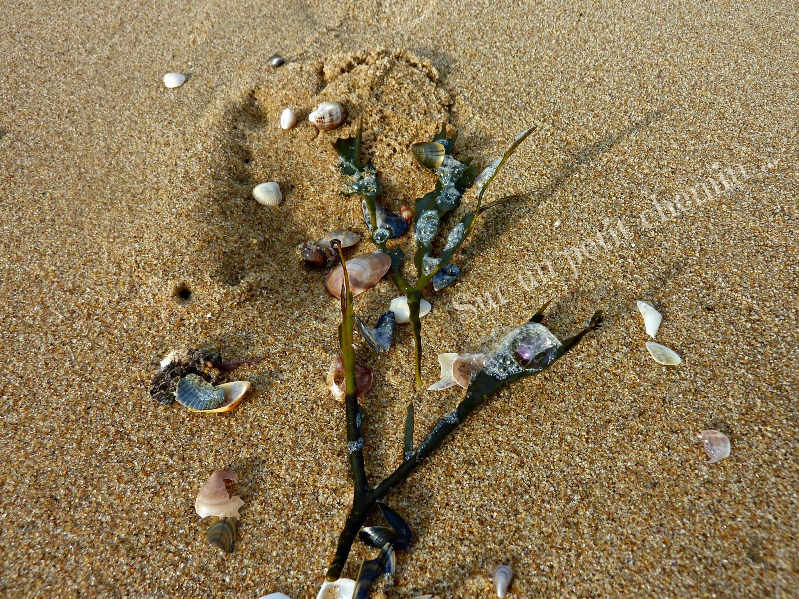 Un bouclier de protection autour du petit coquillage - Grande Plage de Saint Gilles Croix-de-Vie en Vendée