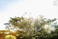 casal morando no exterior que optou fazer o casamento em sua cidade natal, porto alegre, e escolheu como cenário o alto da capela organização e cerimonial de fernanda dutra cerimonialista em porto alegre especializada em destinatio wedding