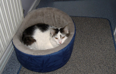 Cat Beds: Excellent and Quality Beds For Meowing Freind