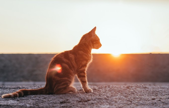 5 Best Destinations For Those Who Love Cats