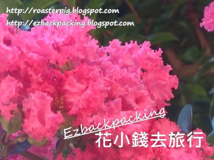 香港紫薇花