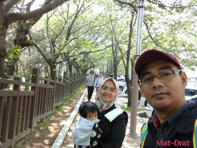 Dalmaji-gil road Tempat menarik di Busan Korea Interesting Place Cherry Blossom