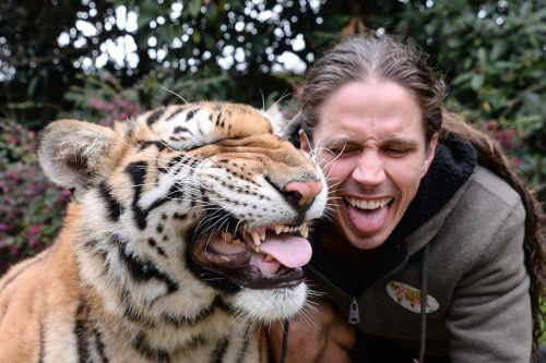 The man of the 'forest man' lives with a large number of tigers