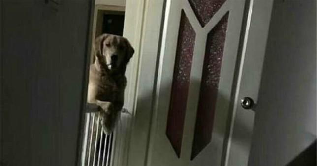 Κάθε νύχτα, ο σκύλος έμενε ξύπνιος και κοίταζε το αφεντικό του μέχρι αυτός να αποκοιμηθεί.
