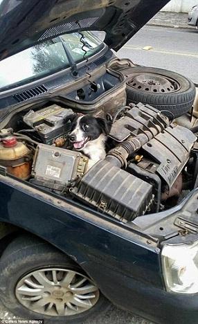 ACIDENTE - Motorista para carro por suspeita de pane mecânica e encontra cão preso ao motor