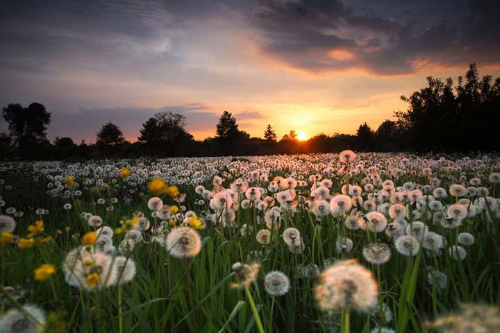 gün batımı manzaralı çiçek resimleri