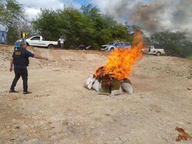 Mais de 600 quilos de drogas são incinerados em Itaguaçu da Bahia nesta quinta-feira, 06