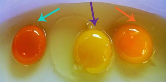 Tidak Semua Telur Itu Sehat, Berikut Cara Membedakan Telur Ayam Sehat Dan yang Tidak Sehat...Baca Selengkapnya ???