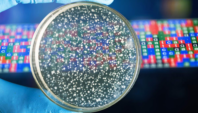 Genoma de bacteria y biologia