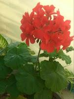 flower referring women