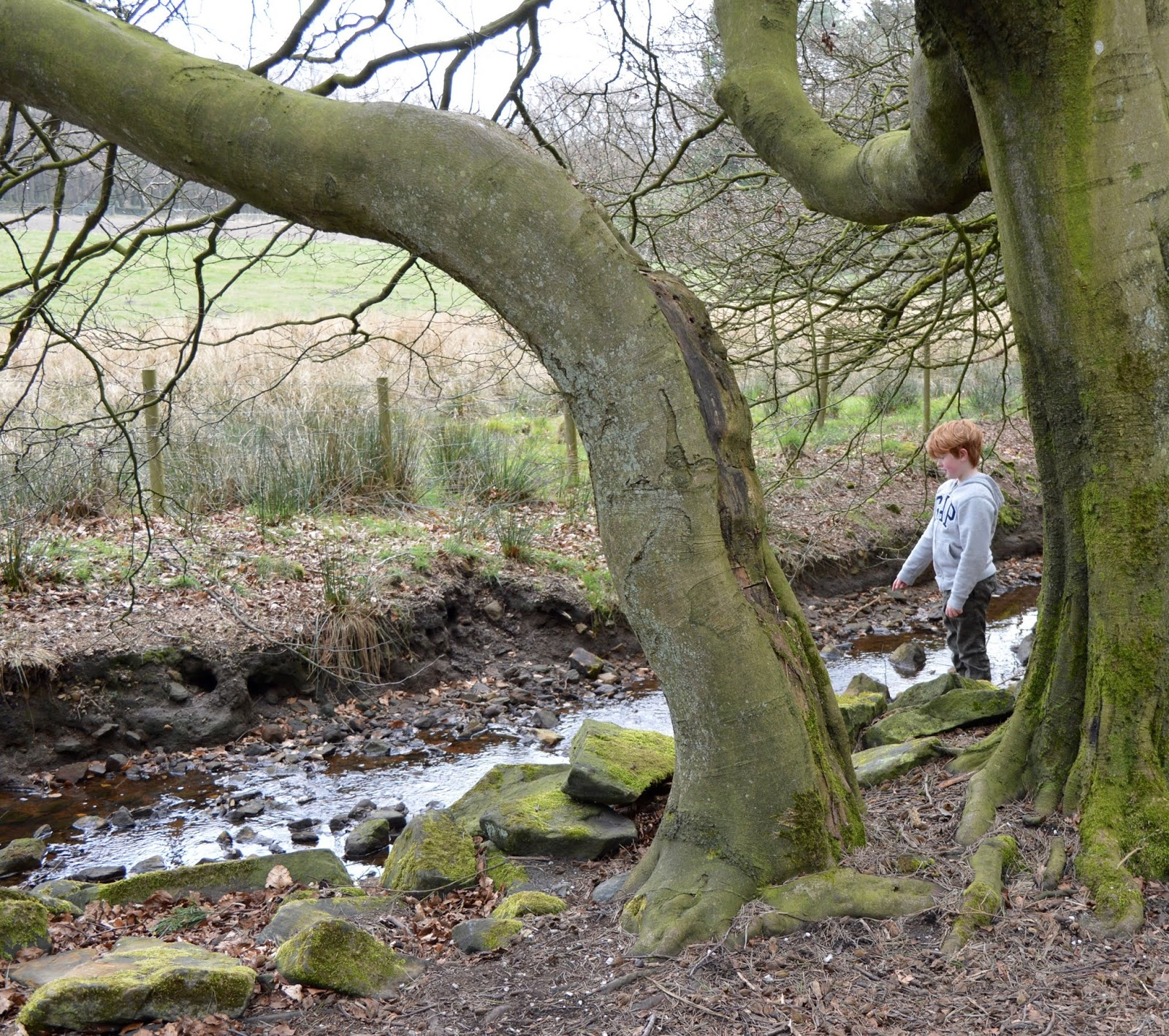 A Review of Darwin Forest & The Peak District with Tweens  - nature trail
