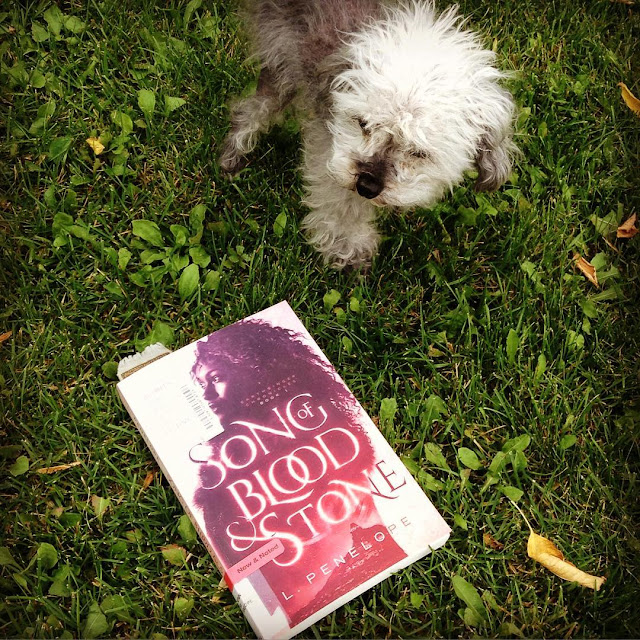 Square image of a fuzzy grey poodle standing on some very green grass. A short distance away from him is a trade paperback copy of Song of Blood and Stone. Its cover features a young black woman awash in pink tones. The shot is taken from above.