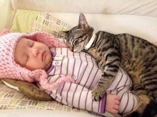 Bebés y gatos