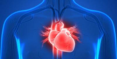 تفسير رؤيا القلب في المنام معنى رؤية قلب الإنسان في الحلم