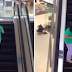 EPIC FAIL: A Lady Busy Texting Almost Lost Her Direction!
