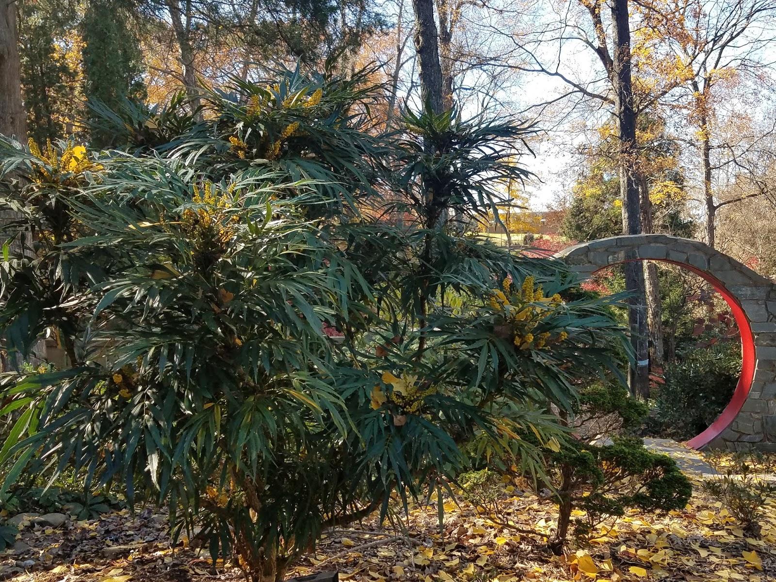 UNC Charlotte Botanical Gardens.    November 26, 2017.