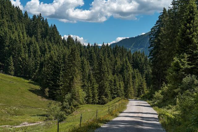 Waldwandern in Saalbach | Wanderung zu den Waldteichen am Maisereck | Saalbach - Maisalm - Wirtsalm - Waldteiche - Spielberghaus - Saalbach | Wandern-SalzburgerLand 17