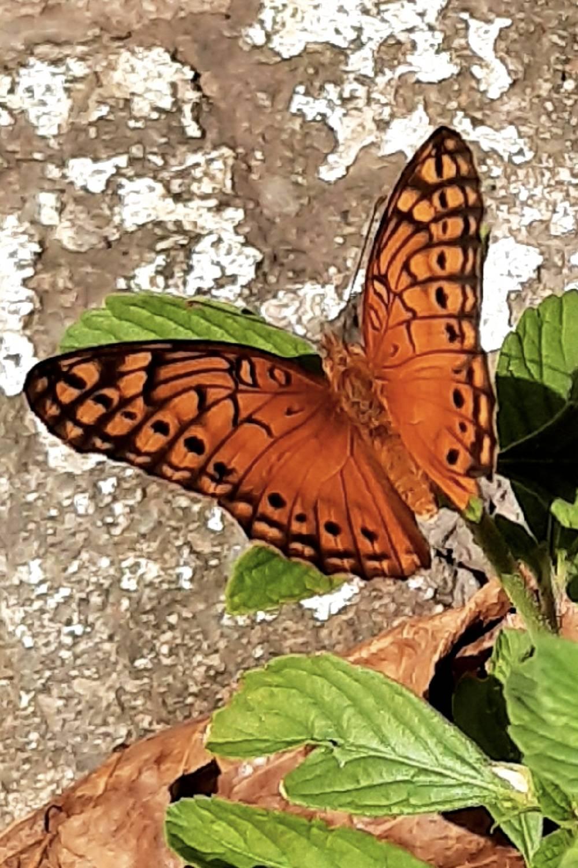 literatura paraibana olhar poetico borboleta belezas natureza
