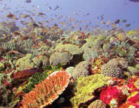 Keindahan dasar laut Kepulauan derawan