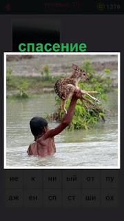 парень из воды спасает небольшого олененка на руках