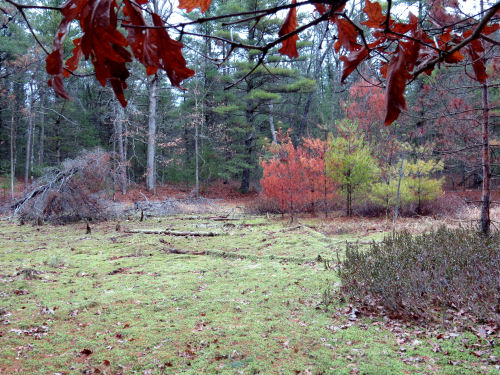 semi-dry wetland with sphagnum moss