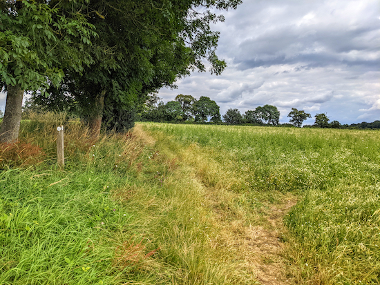 Keep right, still on Kimpton footpath 23, then cross the crop to a junction