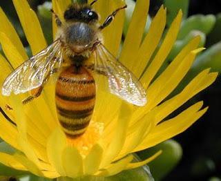 Foto de la abeja