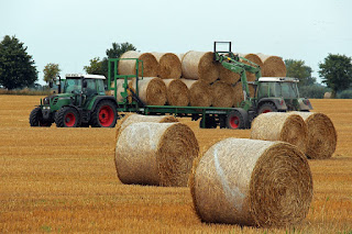 Where can an Agricultural Economist Work in Nigeria