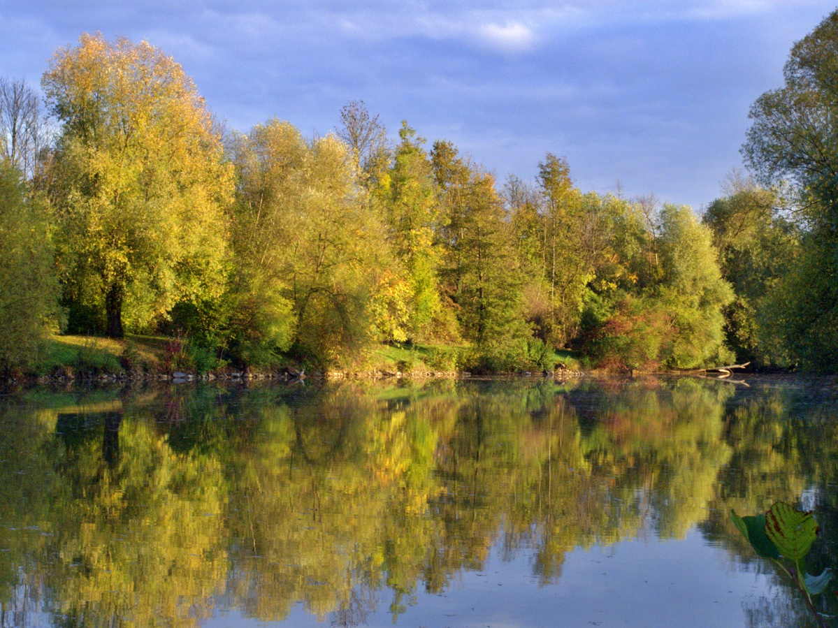 #297 Pentax 03 Toy Lens Telephoto f5.6 3.2mm – Herbstimpressionen am Aileswasensee (7)