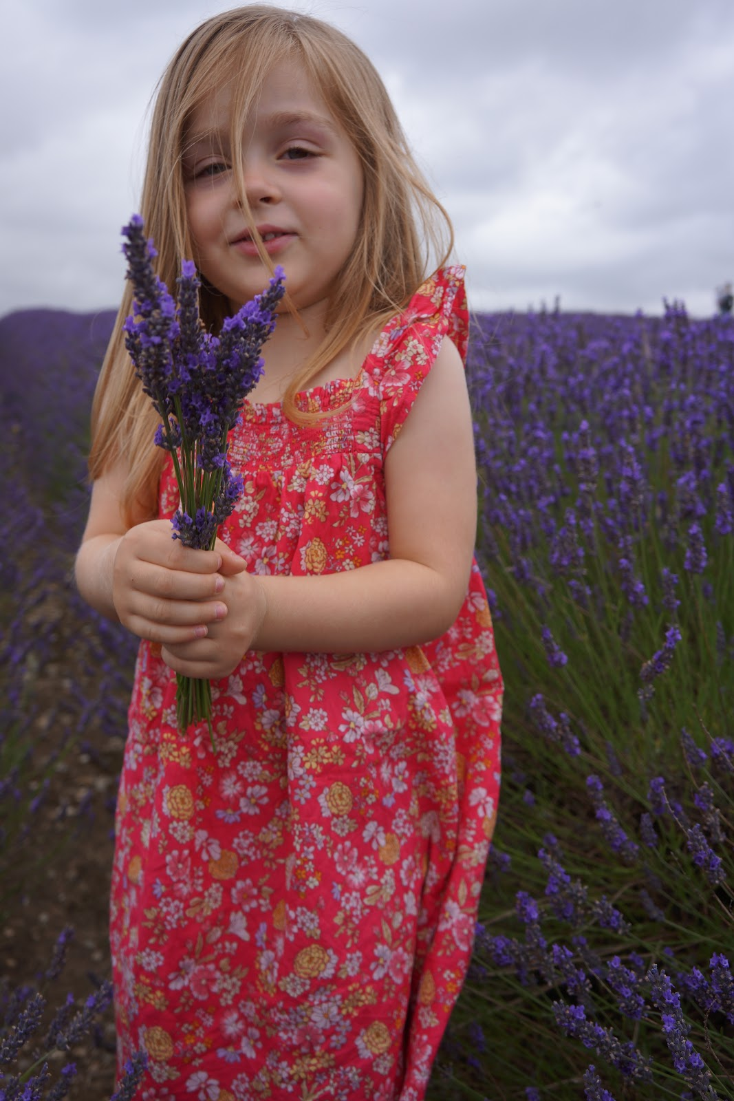 Some top tips for visiting lavender fields: Little girl holding a lavender bouquet
