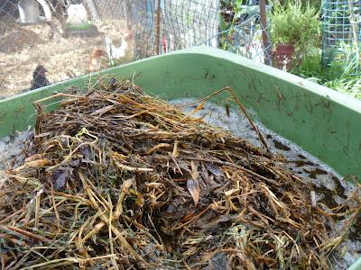 Liquid Compost Tea Brewer Kit Whole Foods
